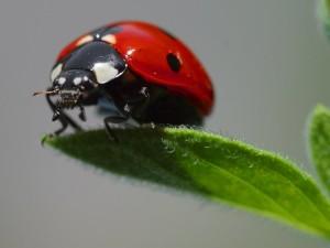 ladybug-3558 640