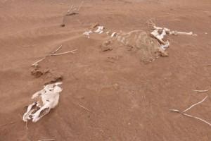 Wüste Sterben