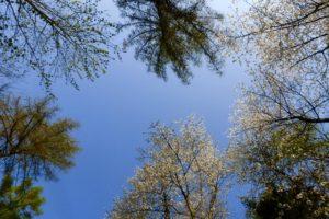 Blicke zum Himmel und in blühende Bäume