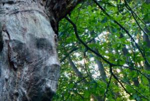 Achtsamkeit findet Baumgesichter