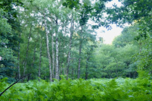 Wundermittel Waldbaden