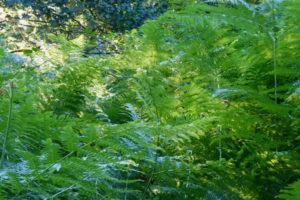 Waldbaden, eine grüne Wohltat für die Augen